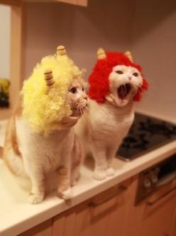 #cat: Cats, Animals, Funny Cat, Pet, Costume, Crazy Cat, Funnies, Kitty