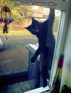 Cat surprise...: Funny Animals, Funny Cats, Crazy Cat, Funny Stuff, Black Cat, Cat Lady