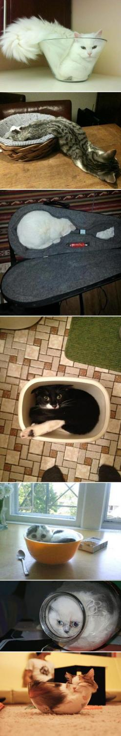 Cats Are Everywhere Compilation, Click the link to view today's funniest pictures!: Kitty Cats, Funny Cat, Cats Fit, Liquid Cats, Animal, Cat Lady