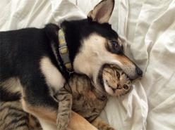 Cats are friends, not food.: Cats, Animals, Best Friends, Dogs, Stuff, Pets, Funny Animal, Photo