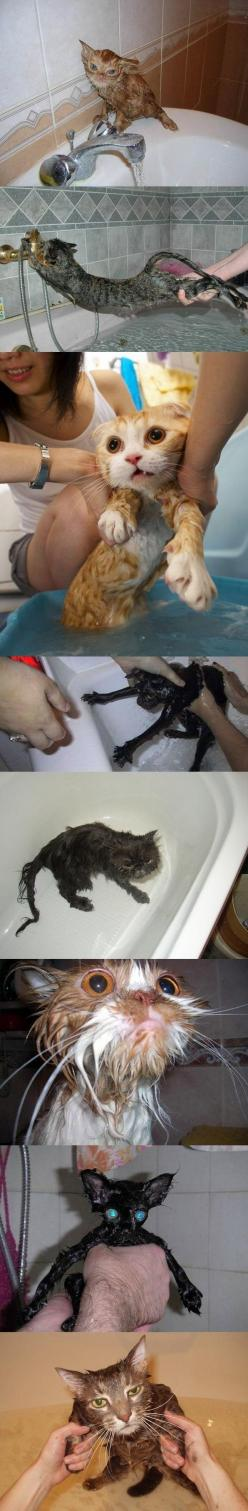 Cats in the bath: Funny Cats, Cat Baths, Poor Cats, Wet Cats, Bathing Cats, Baby, Died Laughing, Bath Time, Animal