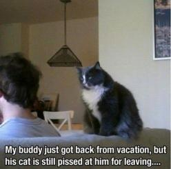 Click to view >> http://funnypicdump.com for #FunnyPictures: Cats, Animals, Vacation, Funny Stuff, Humor, Funnies, Funny Animal