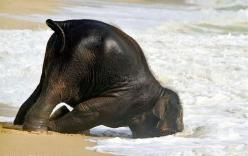 Community Post: The 50 Cutest Things That Ever Happened: Baby Animals Funny, Cute Animal, Elephants ️, Baby Elephants, At The Beach, Funny Elephant Pictures, Elephants 3