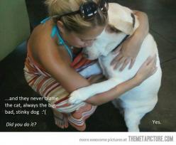 Consoling the dog…: Animals, Dogs, Funny Pics, Funny Pictures, Funny Stuff, Funnies, Humor