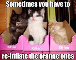 Cute!!!!!!!!@@@@@@@@@@@@@     Dump A Day Attack Of The Funny Animals - 32 Pics: Cats, Animals, Funny Cat, Crazy Cat, Kittens, Funny Animal, Kitty, Cat Lady, Funnie