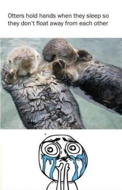 Cute little otters: Otters Holding Hands, Hold Hands, Animals, Sweet, Stuff, The Face, Funny
