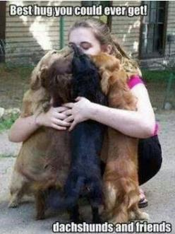 dachshunds are the best huggers: Animals, Dachshundhug Doxie, Weiner, Puppy, Doxie Hugs, Wiener Dogs, Doxiemom Wienerdog, Doxies Hugs, Doxies Dachshunds