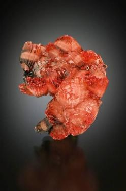 Dancing bear?  Almost 4 cm Rhodochrosite from Northern Cape Province, South Africa.  Poto bu Jeff Scovil: Photo Byjeff, Rocks Minerals, Beautiful Rocks, Precious Rocks, Colorful Gemstones, Semi Precious Stones, Beautiful Stones, Byjeff Scovil, Beautiful G