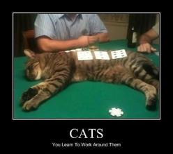 Deal with it, humans…: Big Cat, Animals, Funny Cats, To Work, Crazy Cat, So True, Funnies, Funny Animal, Cat Lady