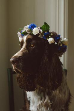 delta-breezes:  Babes in Boyland | Lovely Life: Flower Crowns, Animals Dogs, Doggies, Pets, Creatures, Flower Power, Friend