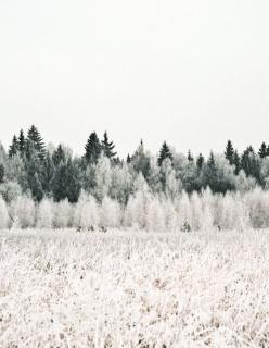 Discoveries: Life, Inspiration, Quotes, Tree, Nature, Winter Wonderland, Things, Landscape, Photo