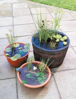do it yourself fountain - If I could keep these plants alive, maybe I stand a chance with other ones: Container Water Garden, Mini Pond, Garden Ideas, Water Gardens, Water Features, Water Gardening, Watergardens, Outdoor Water