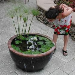 Do you love the idea of a pond, but don't have an actual yard to place one in? No fear — you can cultivate a mini watery paradise on your balcony or terrace with very little effort by creating a container water garden. By selecting a variety of plants
