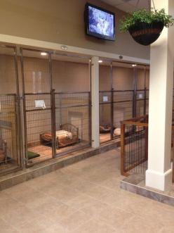 Dog and Large Animal Custom Enclosures - Mason Company Gallery: Custom Enclosures, Boarding Kennel, Kennel Idea, Large Animal, Animal Custom, Animal Rescue Idea, Dog Kennels, Animal Shelter