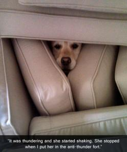 Dog parenting.  You're doing it right.: Anti Thunder Fort, Funny Animals, Dogs, Strong, Thunderfort, Pets, Funnies, Poor Baby