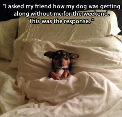dog-sleeping-in-your-bed.jpg 620×591 pixels: Animals, Dogs, Bed, Pet, Humor, Funny Animal, Friend