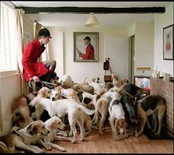 Dogs!    As seen at the National Portrait Gallery Taylor Wessing Photographic Portrait Prize in... 2008 I believe!: Photographers, Animals, Walker Photography, Dogs, Hound, Timwalker, Tim Walker, Fashion Photography