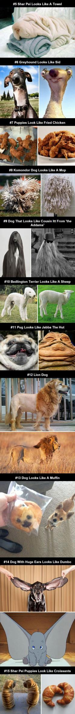 Dogs That Look Like Other Things: Look Alike, Funny Animals, Same Animal, Funny Dogs, Puppy Meme, Cooking Grease, Funny Dog Meme, Fried Chicken