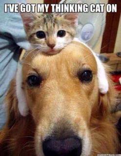 dogs with hats: Cats, Animals, Dogs, Pet, Funny, Thinkingcat, Friend