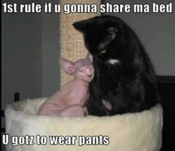 Dump A Day Funny Animal Pictures Of The Day - 27 Pics: Funny Animals, Wear Pants, Funny Cats, 1St Rule, Funny Pictures, Funny Stuff, Funnies, Things, Kitty