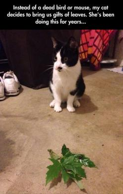 Dump A Day Funny Pictures Of The Day - 93 Pics. This cat is a trained hunter...professional leaf hunter: Cats, Vegan Cat, Gift, Leave, Funny Pictures, Funny Cat, Funny Animal, Kitty, Cat Lady