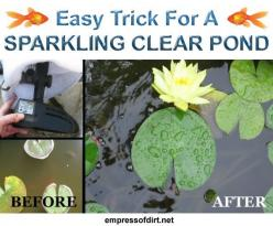 Easy trick for a sparkling clear pond - no chemicals, just a few household supplies >>>: Ponds, Pond Ideas, Water Features, Clean Pond, Sparkling Clear, Sparkling Clean