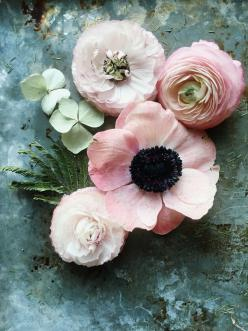 Emily Quinton Botanicals | Makelight: Pink Flower, Color, Pale Pink, Flower Power, Bloom, Quinton Botanicals, Floral Arrangement, Flowers, Emily Quinton