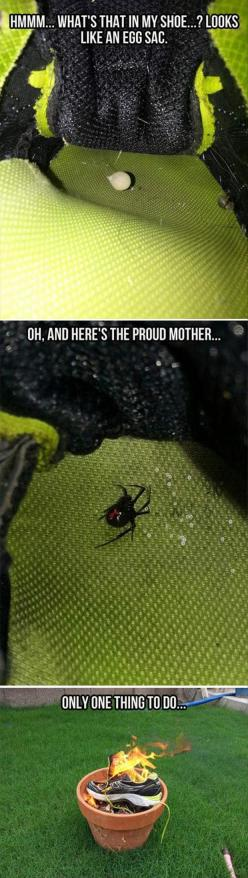 Even though I have always been scared of spiders, Pinterest has definitely made it worse!! True story!!: Black Widow, Giggle, Funny Pictures, Funny Stuff, Wear Shoes, Hate Spiders, Things To Do, Haha So True