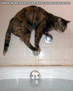 Everybody knows that cats don't like to get wet but this is taking things to a whole new level! #cat #ninjacat #funnycat: Cats, Animals, Nope, Bath, Funny Stuff, Funny Animal, Kitty, Funnie