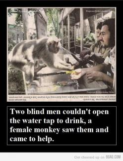 Faith in Humanity Restored. (Um...the men didn't do anything. The monkey did. So...faith in primates restored?): Blind Men, Sweet, Life, Stuff, Beautiful, Faith In Humanity Restored, Amazing Animals, Monkey
