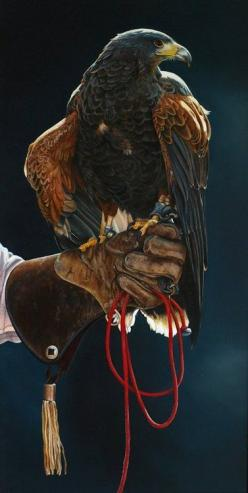 "Falconer.  They are the only domestic raptors, apart from other individuals.  But you have to wear leather gloves as their claws are sharp.  And you thought your parrot was ""prickly"".: Hunting Hawk, Animals, Eagle, Hawks, Raptor, Beautiful Birds"