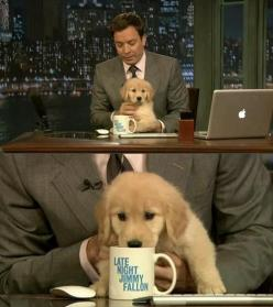 Fallon with a little pup: Dog Gary, Animals, Dogs, Late Night, Jimmy Fallon, Golden Retrievers, Puppys, Jimmyfallon, Photo