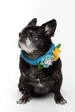 Floral Crochet Dog Collar. Miles would kill me if I made him wear this, but i love it!: Crochet Collar, Doggie, Dog Collars, Pets, Crochet Animals, Crochet Dog Collar, Baby Dogs