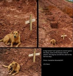 Forever faithful: Animals, Sweet, Dogs, Heart Ache, Pet, Things, Friend