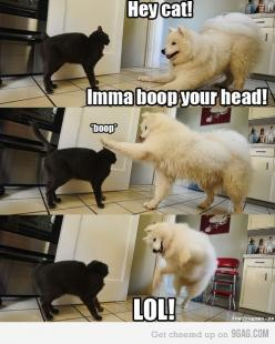 Funny!: Cats, Animals, Dogs, Funny Stuff, Funnies, Funny Animal, Boop