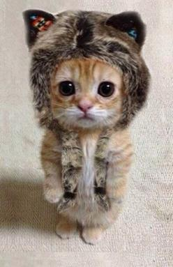 Funny: Cute animal pics {Part 159}: Cats, Animals, So Cute, Pet, Funny, Kittens, Kitty, Has