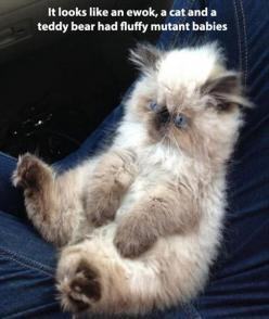 funny pictures of cats: Cats, Funny Animals, Teddy Bears, Kittens, Baby, Kitty, Cat Lady