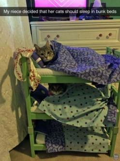 Funny Pictures of the Day 142 (39 pict)   Funny pictures: Cats, Animals, Cat Bunk, Bunk Beds, Funny, Cat Sleeping, Photo, Bunkbeds