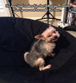 Funny Pictures Of The Day – 91 Pics: Funny Animals, Face, Farting Dog, Dogs, Funny Pictures, Funny Stuff, Funnies, Dog Fart