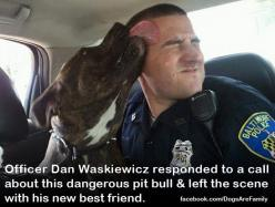 funny pitbull pics | Pit bulls were the dog of choice for famous personages such as ...: Police Officer, Animals, Best Friends, Sweet, Dogs, Pets