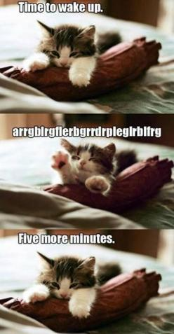 #FunnyPhoto: Animals, Minutes, Cute Cats, Truth, Funny Stuff, Funnies, Hate Mornings, Mylife