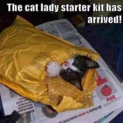 #FunnyPhoto: Cats, Lady Starter, Animals, Catlady, Funny, Crazy Cat, Cat Lady