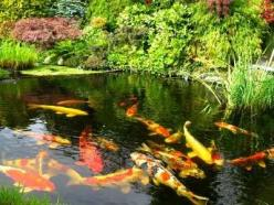 Garden fish pond for Koi ai want one in my lotto house ! LOL: Water Feature, Garden Ideas, Water Gardens, Koi Fish, Koi Ponds, Koifish, Fish Ponds