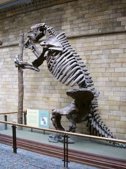 Giant Ground Sloth fossil skeleton (Megatherium we think).: Sloth Colossal Fossils, Dinosaur Fossils, Dinosaurs Fossils, Fossils Paleontology, Fossils Mummy History, Amber Stones Fossils, Photos Fossils, Fossils Prehistoric