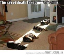 Ha!  There is nothing better than finding a ray of sunlight in your house and laying on it.  My dog exactly!: Cats, Animals, Dogs, Pet, Funny Stuff, Death Ray, Funnie