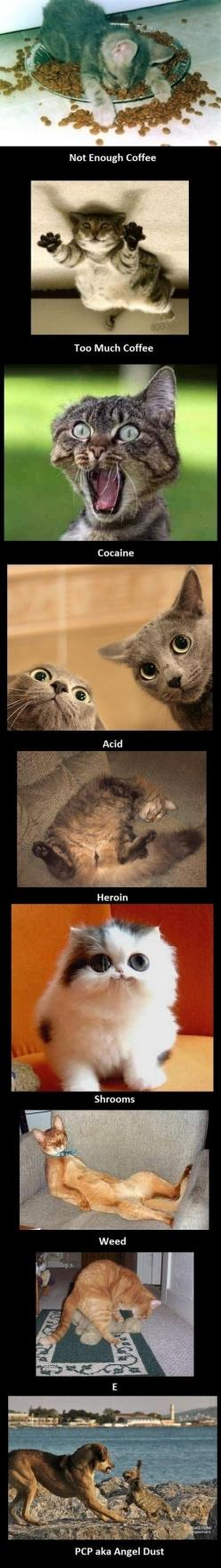 Haha - animals make everything even funnier to me!: Cats, Animals, Funny Cat, Drugs, Crazy Cat, Humor, Funnies