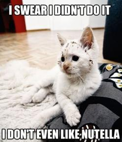 hahah this totally reminds me of my cat: Animals, Funny Cats, Funny Stuff, Funnies, Humor, Funny Animal, Kitty, Nutella