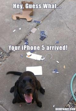 Hahaha #humor #funny #lol #captions: Iphone 5S, Funny Animals, Animal Pictures, Giggle, Funny Dogs, Bad Dog, Puppy, Funnies