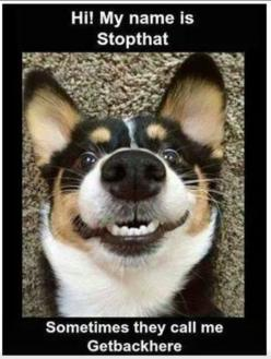 HAHAHA oh this makes me laugh, this look is what Maddie gives me and those are her names lol: Funny Animals, Dogs, Pet, Corgi, Funny Stuff, Funnies, Smile