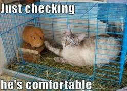 Hahahaha Im sure my cats would love to do this: Cats, Animals, Funny Cat, Funny Stuff, Funnies, Funny Animal, Guinea Pigs